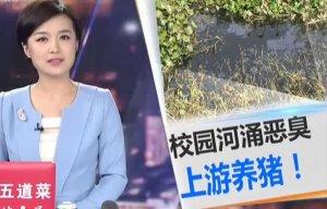 广州 高校河涌恶臭!上游有家猪场正在养猪!
