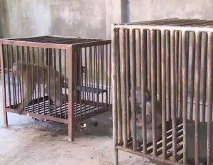 男子轻信猪猴相配能旺风水 竟在养猪场养猕猴