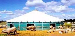 帐篷、蒙古包、小竹筏?养猪还能这么玩?!