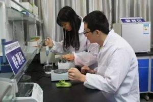 """青年科学家的""""深圳猪基因"""""""