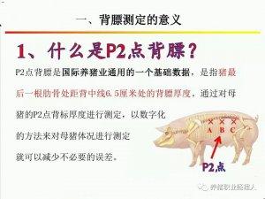 技术控|精细化的母猪管理才是提高繁殖效