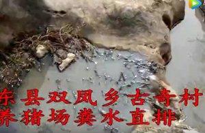 邵东县双凤乡古奇村养猪场严重污染周边环境!