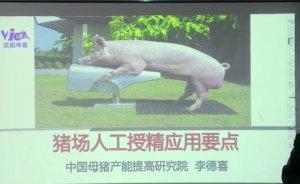 猪场人工授精的应用要点,干货分享!