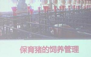 保育猪的饲养管理技术,详细分四部分!