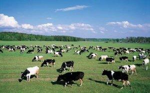 2018第六届湖北武汉畜牧业博览会暨饲料兽药、奶业、畜
