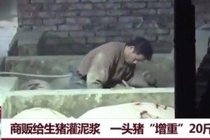 """商贩给生猪灌泥浆 一头猪""""增重""""20斤"""
