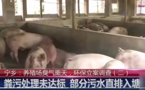 养猪场恶臭熏天邻居不堪其扰,环保立案调查