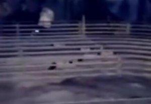 实拍:迷你小土猪赛跑,为了糊口也是拼了