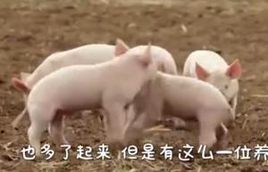 农村大叔创新养猪法, 价格提升3倍, 销量更大……