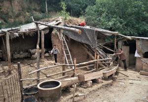 羊赚了猪赔了,农村帮扶户想靠养殖脱贫,却绕不开靠天吃饭的困惑