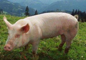 法国家庭农场PSY能达29.5,种公