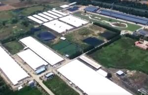 国内第一猪场!高科技轰动整个养殖业……