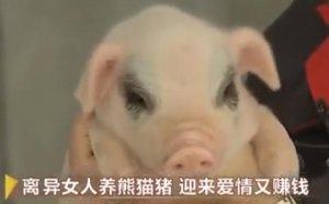离异女人养熊猫猪,迎来爱情又赚钱!