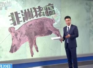 猪瘟疫情是否会感染人?该病毒不会感染人
