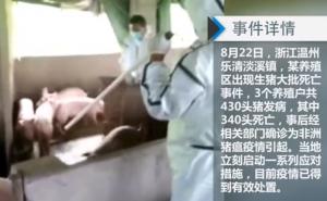 340头猪突然暴毙,已确诊为非洲猪瘟疫情