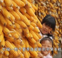 农村玉米每亩只赚200块,农户:辛苦半年,不如打工1天挣得多!