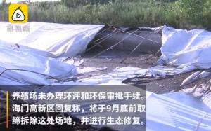 非法养猪场泔水养猪,猪粪堆成山危及长江生态!