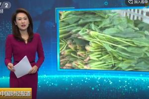 8月蔬菜价格先涨后跌,叶类菜降幅最大!