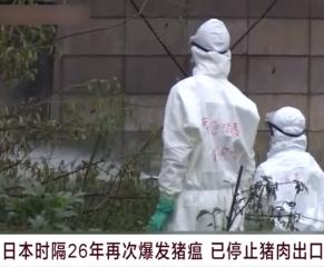 日本时隔26年再次爆发猪瘟 已停止猪肉出口