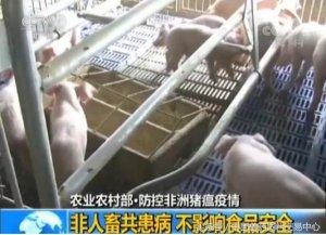 生猪主产区非洲猪瘟频发,兽药行情能否迎
