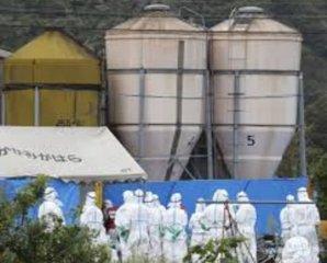 日本养猪场瞒报猪瘟疫情,60头死猪被悄悄做成了堆肥
