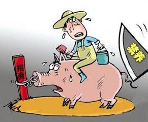 大风暴!疫情频繁下,环保禁养仍在继续,猪农整日提心吊胆!