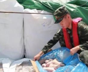 猖獗!广东一个月连破3起走私案,查获冻肉1000余吨,多产自美国