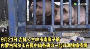 吉林 内蒙古各确诊一起非洲猪瘟疫情!病死和扑杀猪均已处理