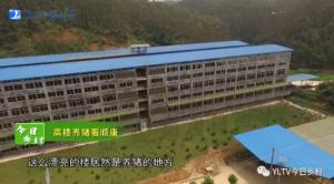 广西玉林六层猪场视频曝光,已投产高楼养猪究竟咋样?