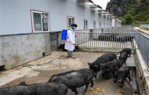 【猪场建设】水泥地面养猪弊端的解决方案