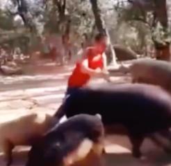 这是我见过跑的最快的猪了……