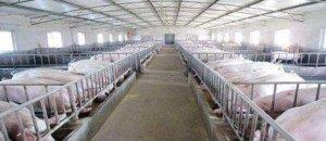 国土资源部力挺农村养殖业 村民:可养猪场都被关了