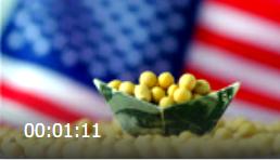 东北国产大豆价格刚有上涨趋势,美国大豆又要来中国了?