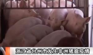 浙江台州市再曝非洲猪瘟疫情,疫区生猪全部扑杀!