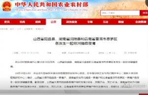 山西阳曲县西凌井乡排查出非洲猪瘟疫情,已得到有效处理