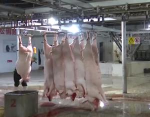 把好生猪屠宰关,确保群众吃上放心肉