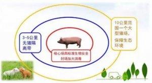 猪场如何建立防线在疫情逆境求生?