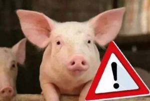 猪价整体企稳,疫情新发区域价格下跌!