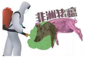 中国的非洲猪瘟病毒可能来自这里....