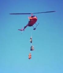 三只挂在直升机上的大肥猪,猪已经蒙圈了