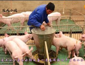 """""""最适宜""""仔猪蛋白,因非洲猪瘟不能用,还有什么替代品吗?"""