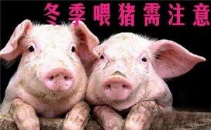冬季养猪:各个阶段猪群的注意事项都在这了,请养殖户查收!
