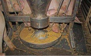 把握发酵湿料这些小技巧,猪场养殖效益能提高不少!