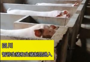 四川省全面暂停生猪和生猪制品入川,全力阻止非洲猪瘟蔓延!
