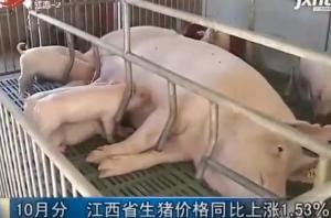 10月份 江西省生猪价格同比上涨1.53%