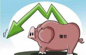 如何减少饲料浪费,为您节省饲料成本
