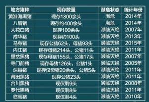 洋猪入侵中国30年:正在爆发一场生态灾难,31种土猪濒临灭绝