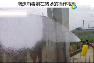 使用泡沫消毒剂消毒,猪场操作视频……