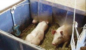 【猪场建设】合理规划设计养猪场内部,尤其是这些细节!非常重要