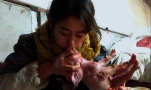 煤二代女孩,嘴对嘴呼吸救活400多头猪!
